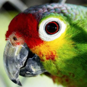 Фестивали и события для птиц